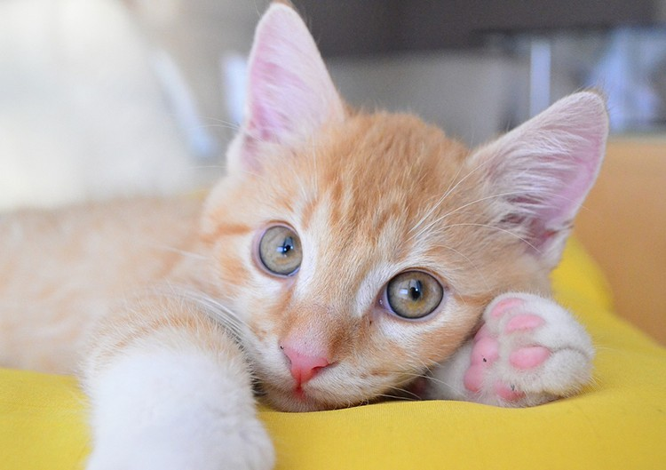 kitten-588148_1280